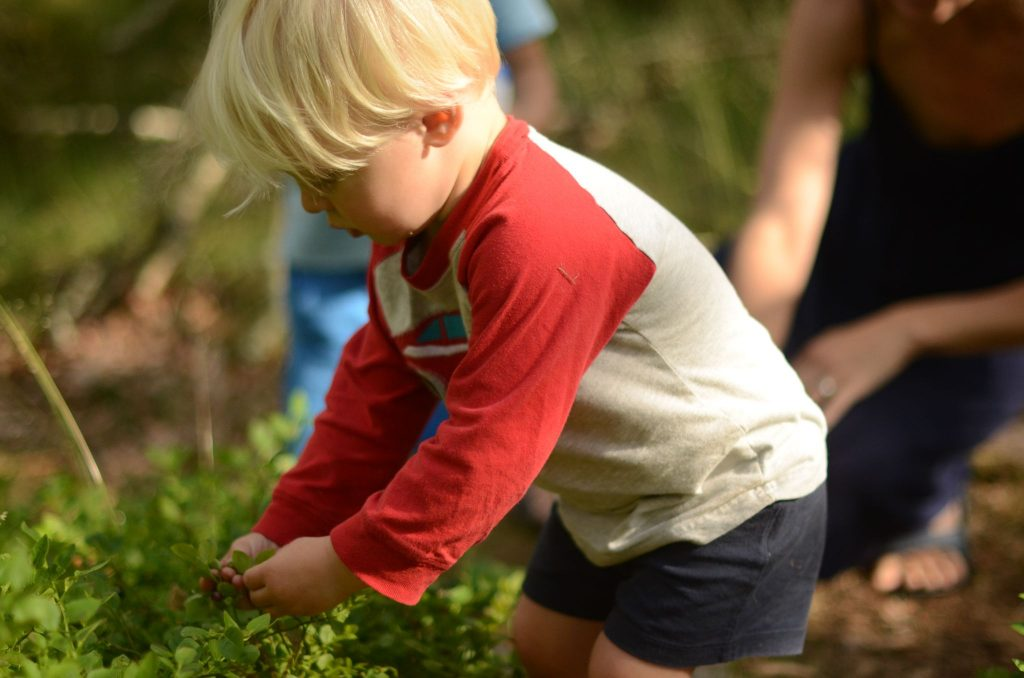 toddler-picking-blueberries-in-forest