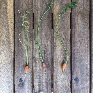 On Growing Carrots and Children