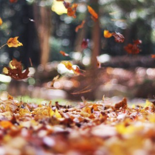 autumn-leaves-falling
