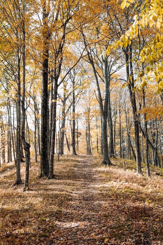 Trail through autumn forest