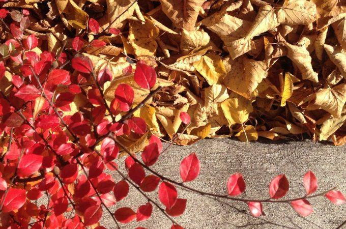 Autumn leaves on curb