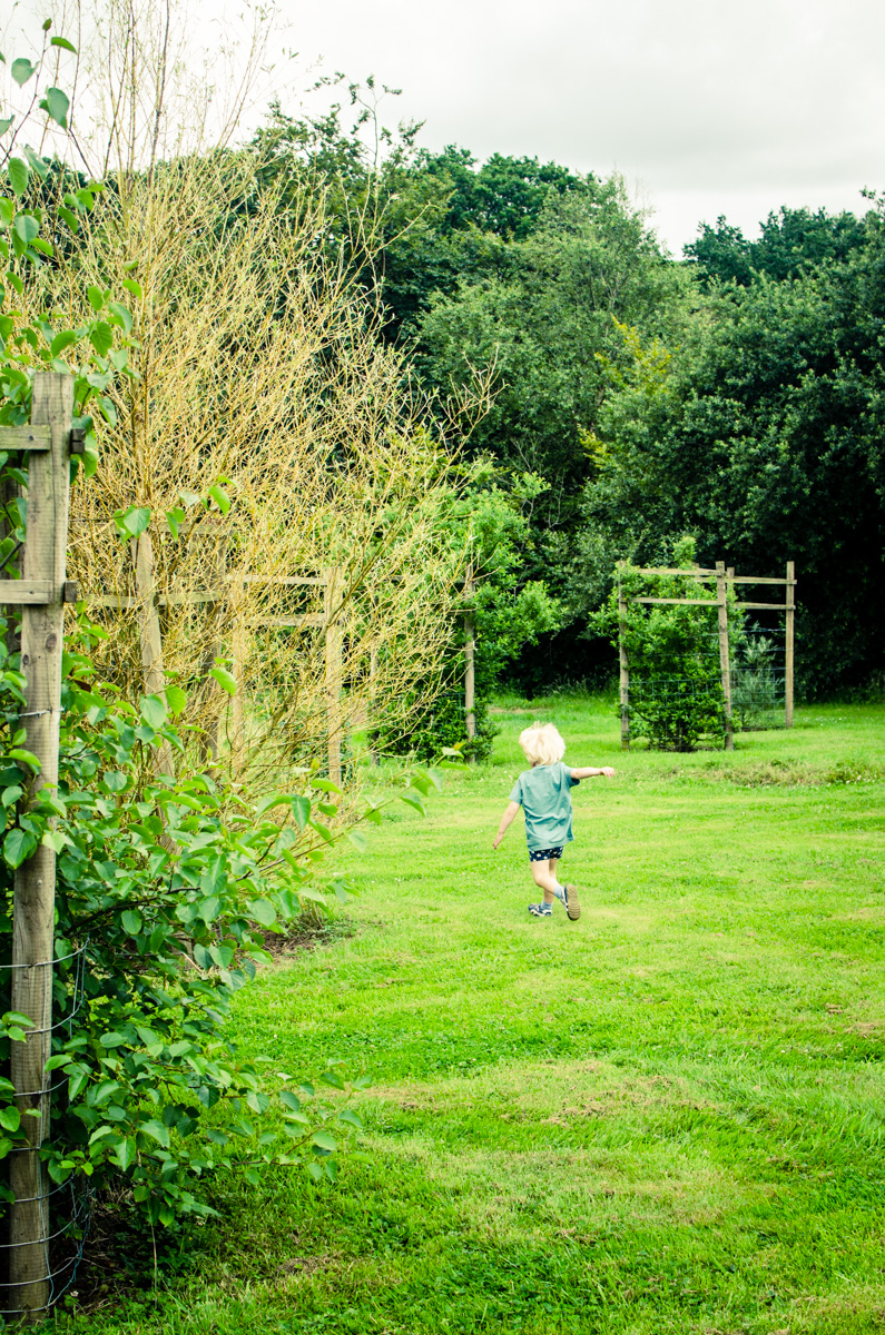 Leif running through the orchard in Devon