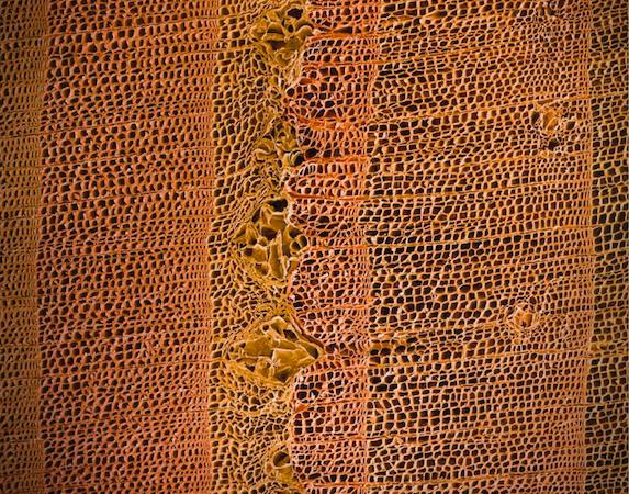 tree_rings_closeup