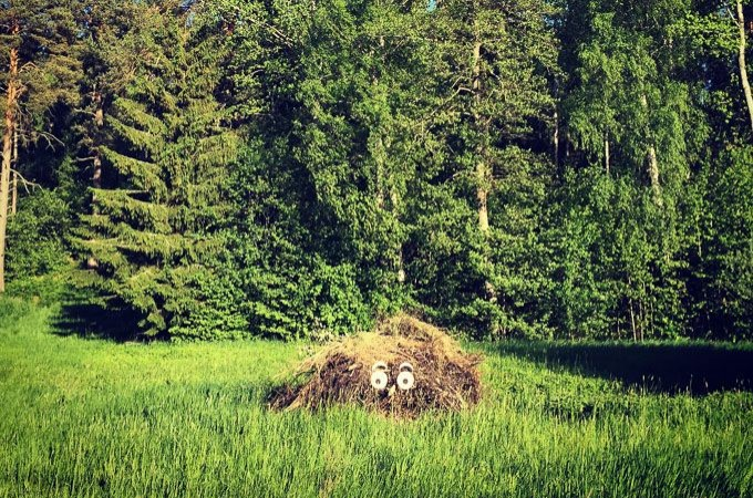 face-on-woodpile-in-field