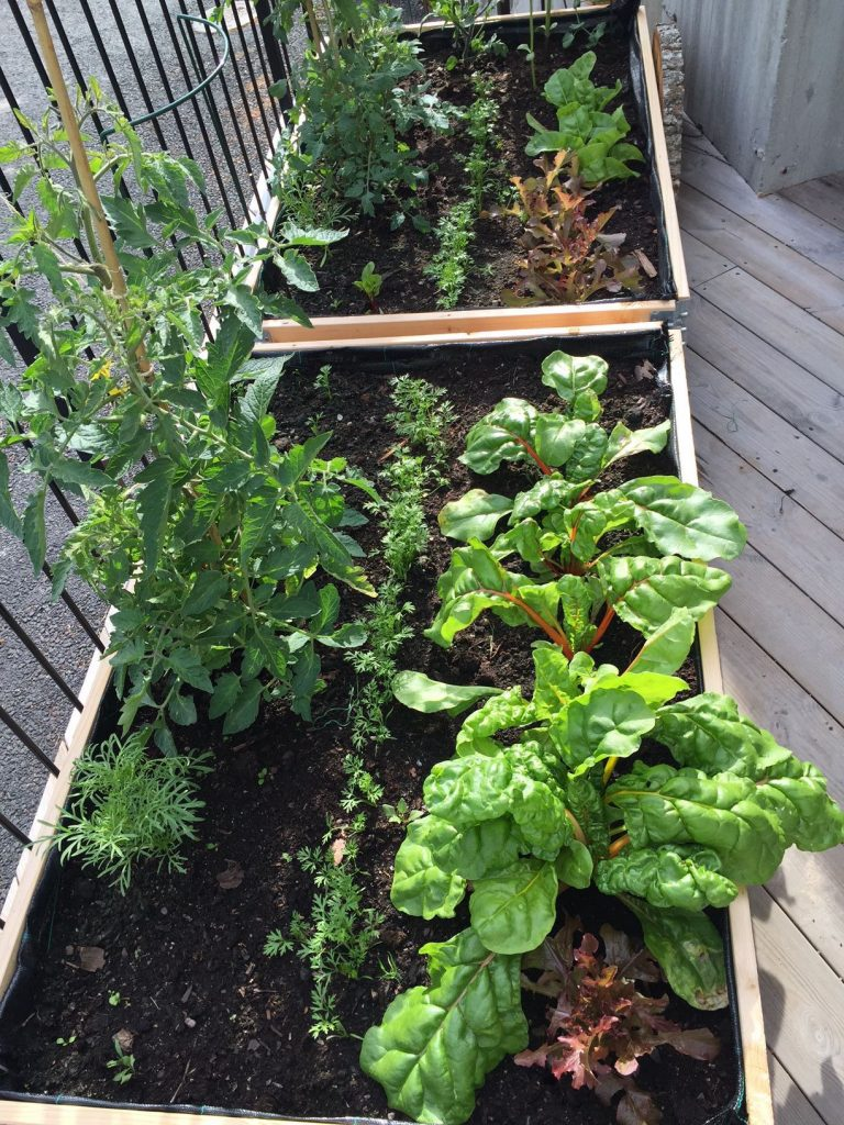 vegetables-in-planter-boxes
