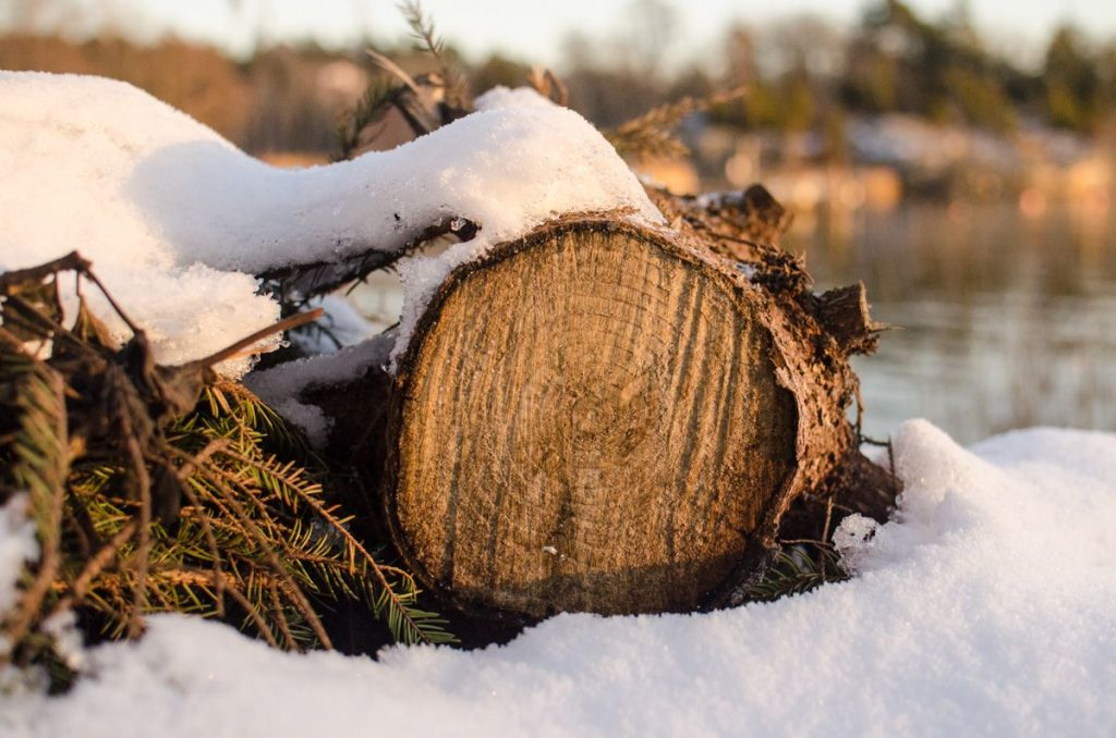 Late afternoon light on snow covered logs