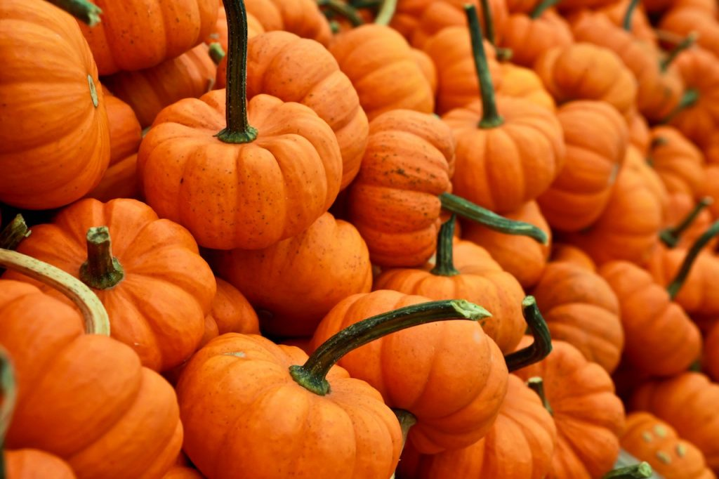 Tons of tiny orange pumpkins