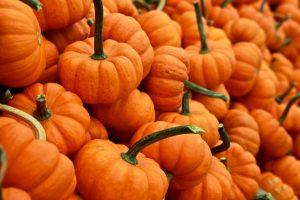 Tons of tiny orange pumpkins