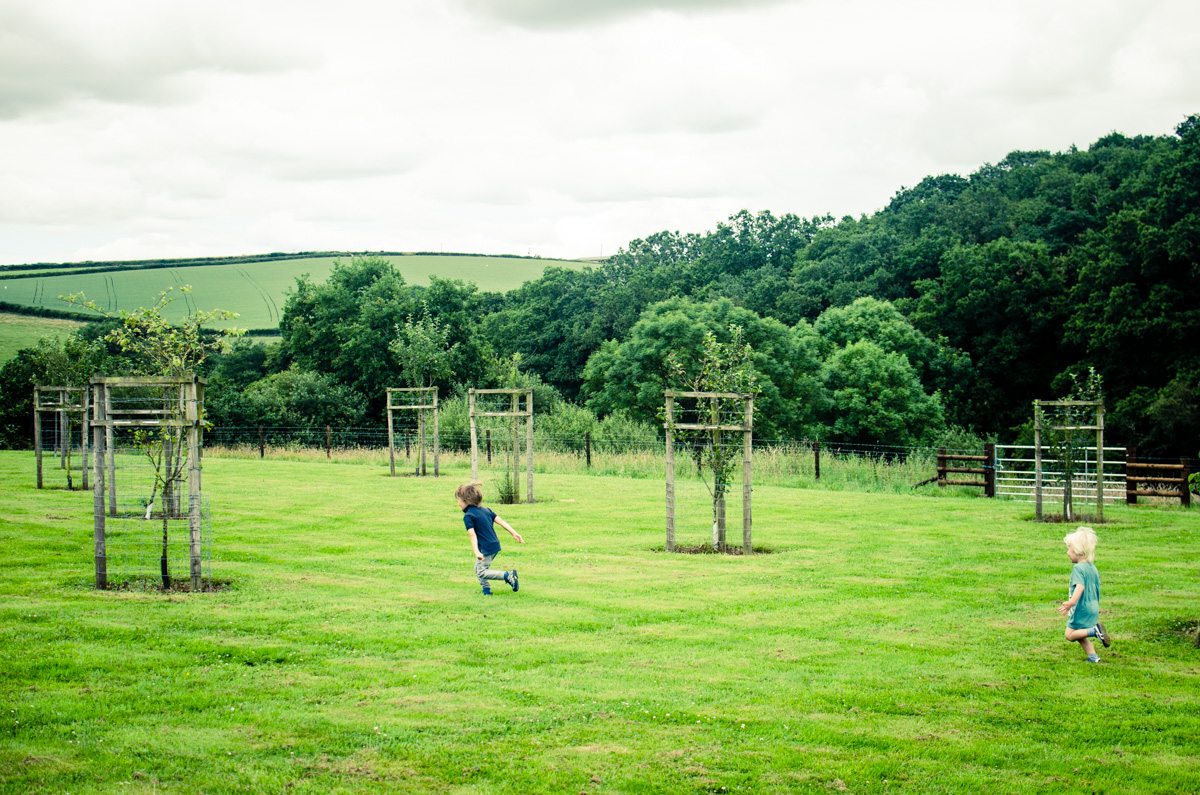 Boys running through the orchard in Devon