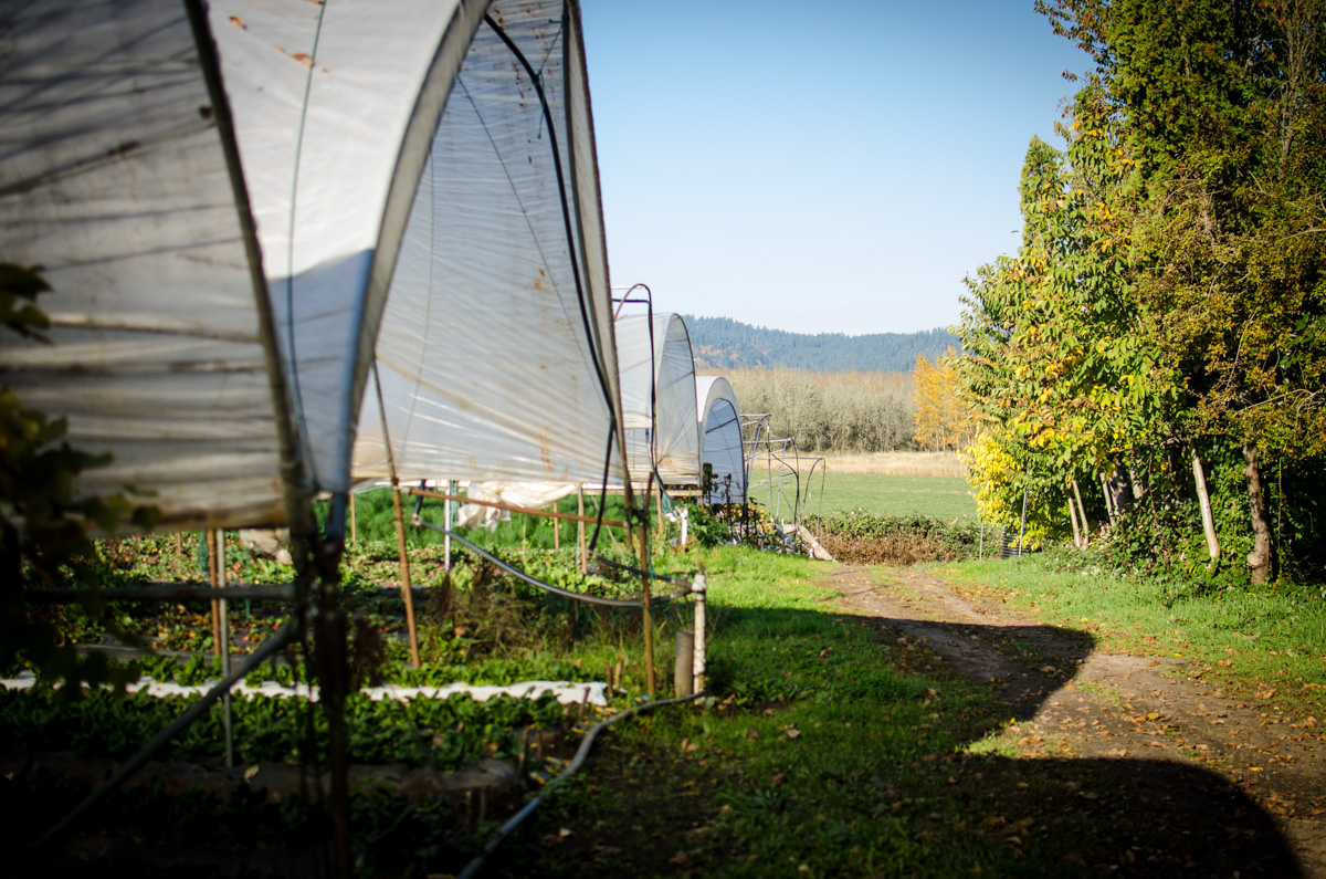 Greenhouse and mountain view at Denison