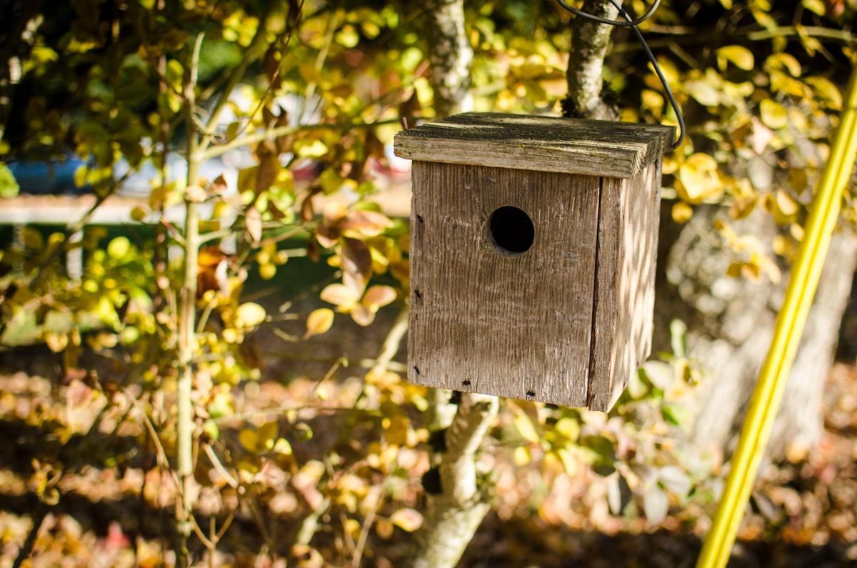 Bird house at Denison Farms