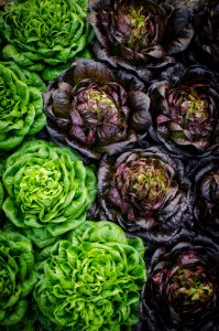 Red and green butter lettuce