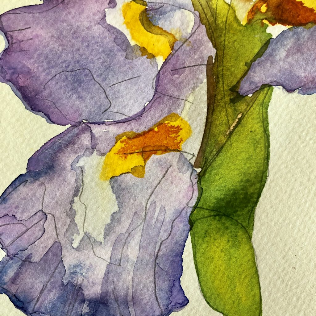 Watercolor iris closeup